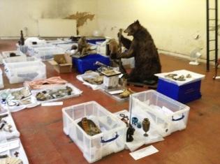 Cuming Museum conservation