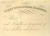 Surrey Zoological Gardens ticket (C5084)
